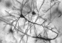 circuiti cerebrali